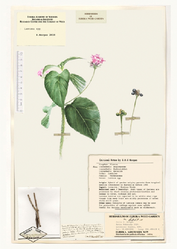 "Shelagh Morgan ""Narrating the Weed Garden"""